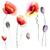 Set of stylized Poppy flowers illustration Royalty Free Stock Image