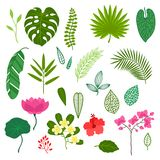 Set of stylized tropical plants, leaves and Royalty Free Stock Images