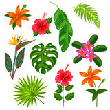 Set of stylized tropical plants, leaves and flowers. Objects for decoration, design on advertising booklets, banners Royalty Free Stock Photo