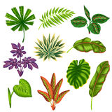 Set of stylized tropical plants and leaves.  Royalty Free Stock Photos