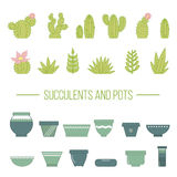 Set of succulent plants, cactuses and pots Royalty Free Stock Photo