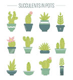 Set of succulent plants and cactuses in pots.rLinear botanical v Stock Photo