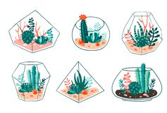 Set of succulents and cactus with terrariums. Vector floral design royalty free illustration