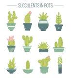 Set sukulentów kaktusy w garnkach i rośliny rLinear botaniczny v Zdjęcie Stock