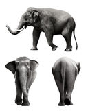 Set of sumatran elephant image Royalty Free Stock Image