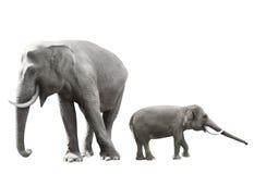 Set of sumatran elephant image Stock Images