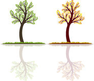 Set, summer and autumn tree vector with reflection Stock Images