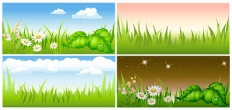 Set summer background Royalty Free Stock Images