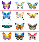Set of summer butterflies on a white background Royalty Free Stock Photography