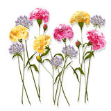 Set of Summer carnations  Floral Greeting Card with Blooming  ga Royalty Free Stock Image
