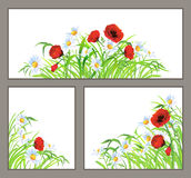 Set summer flower poppy, daisy isolated on white. Set of summer flowers (red poppy, daisy, chamomile) and green grass isolated on white background. Floral corner Royalty Free Stock Photo