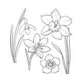 Set of summer flowers, daffodil, snowdrop, crocus, sketch vector illustration Royalty Free Stock Photos