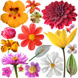 Set of summer flowers Stock Photography