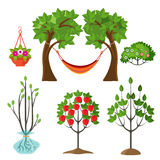Set of summer plants in gardening concept. Apple tree Royalty Free Stock Photos