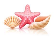 Set of summer sea shells and starfish Royalty Free Stock Photos