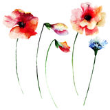 Set of summer watercolor flowers Royalty Free Stock Photo