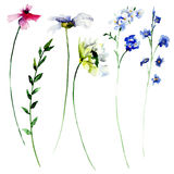 Set of Summer watercolor flowers Stock Images