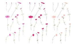 Set of Summer wild field flowers for Greeting Card . Blooming flowers, botanical natural Illustration on white in hand. Drawn style Stock Photo