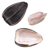 Set of sunflower seed isolated. Set of perfect sunflower seed isolated on white background Royalty Free Stock Image
