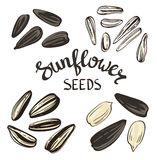 Set of Sunflower seeds with Vintage Stylized Lettering. Stock Image
