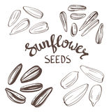 Set of Sunflower seeds with Vintage Stylized Lettering. Vector hand drawn. Stock Photos