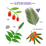 Set of superfood. Goji, acai, chia, sea-buckthorn Stock Image