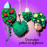 Set of suspended ornamental plants flowers Stock Photo