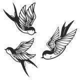 Set of swallow birds on white background. Design elements for logo, label, emblem, sign. Vector image stock illustration