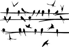 Set of Swallow stand and fly around the branch Royalty Free Stock Images
