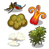 Set of swamp plants and mosquito. Vector Royalty Free Stock Images