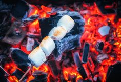Set of sweet marshmallows roasting over red fire flames. Marshmallow on skewers roasted on charcoals.  Royalty Free Stock Photography