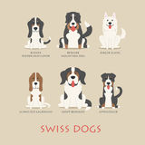 Set of swiss dogs Stock Photos