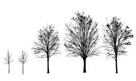 Set sylwetki drzewa bez liści w jesieni i royalty ilustracja