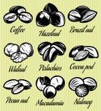 Set symbole deseniuje różnych ziarna, dokrętki, owoc ilustracja wektor