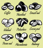 Set of symbols patterns different seeds, nuts, fruits Stock Photo