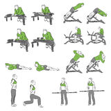 Set systematyczni bodybuilding ćwiczenia Obraz Stock