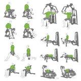 Set systematyczni bodybuilding ćwiczenia Zdjęcia Royalty Free