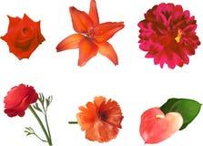 Set sześć czerwonych kwiatów odizolowywających na bielu obrazy royalty free