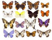 Set szesnaście różnorodnych wibrujących Europejskich motyli Fotografia Royalty Free