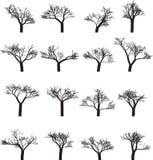 Set szesnaście sylwetek drzewa royalty ilustracja