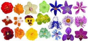 Set tęcza kolorów kwiaty odizolowywający na bielu Obraz Royalty Free