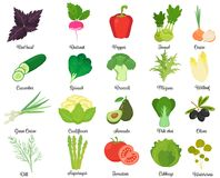 Set of tasty vegetables Stock Photos