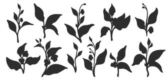 Set of tea bush branches. Vector black silhouette isolated on white background Royalty Free Stock Photos