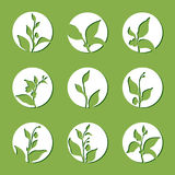 Set of tea bush branches. Vector silhouette in circle isolated on green background Stock Images