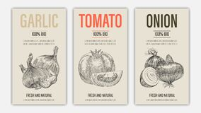 Set of template for branding, cover package, banner, card, label with garlic, tomato and onion in retro vintage hand drawn or