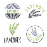 Set of template logo design of abstract icon lavender. Vector illustration vector illustration