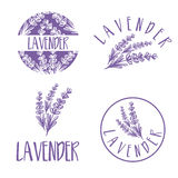 Set of template logo design of abstract icon lavender. Vector illustration royalty free illustration