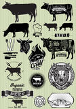 Set of templates on the theme of cow beef for design Royalty Free Stock Images