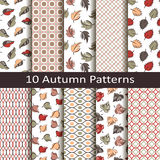 Set of ten autumn patterns Stock Photos