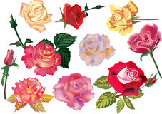 Set of ten color roses Stock Image
